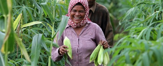 Feeding 9b people by 2050 will require 60% more agricultural production
